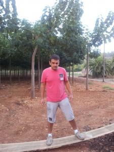Strength paulownia wood - iPaulownia