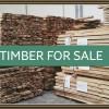 banner-paulownia-timber-for-sale . iPaulownia