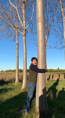 Tree huger - iPaulownia